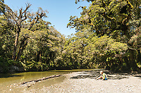 Smoothwater River and native podocarp forest near Jackson Bay, South Westland, West Coast, World Heritage Area, South Island, New Zealand
