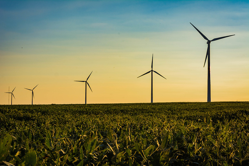 Windmills over a corn field in Illinois.