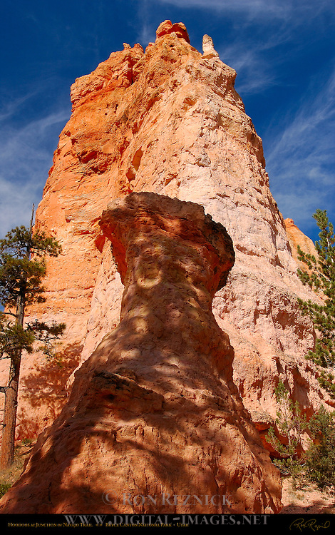Hoodoos at Junction of Navajo Trail, Bryce Canyon National Park, Utah