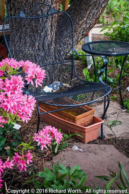 In a garden, with pink flowers blooming, a simple chair and table extend an invitation.