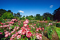 Rose Garden, Botanic Gardens, Christchurch, New Zealand