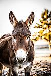 20151209 Waugh Donkey