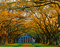 Oak Alley Mansion  Mississippi River, Louisiana Anebellum MAnsion  Evening  March