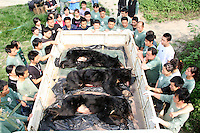 China Bear Bile