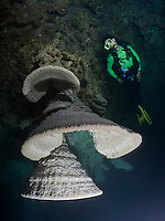RX0731-Dr. scuba diver (model released) exploring a cenote admires unusual speleothems, limestone formations hanging from the ceiling of a submerged cavern 100 feet below the surface. The white misty cloud at the bottom of the picture is a layer of hydrogen sulfide. Riviera Maya, Yucatan Peninsula, Mexico.<br /> Photo Copyright &copy; Brandon Cole. All rights reserved worldwide.  www.brandoncole.com
