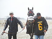 Jerome Stakes - El Areeb