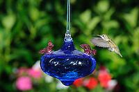 Hummingbird at a blue glass backyard hummingbird feeder