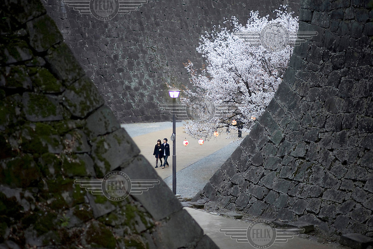 A couple walk past a blossoming cherry tree at the base of the walls of Kumamoto Castle (Kumamoto-jo). /Felix Features