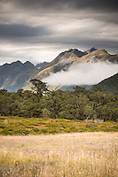 Sub-alpine vegetation with beech trees and bogs near Greenstone Saddle. Livingstone Mountains in beckground, Fiordland National Park, Southland, South Island, World Heritage Area, New Zealand