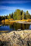CA: Yosemite National Park, Autumn in High Country, fall leaves                 .Photo Copyright: Lee Foster, lee@fostertravel.com, www.fostertravel.com, (510) 549-2202.cayose228