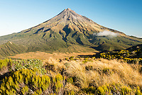 Afternoon light on alpine tussock field with Taranaki, Mount Egmont in background, Egmont National Park, North Island, New Zealand, NZ