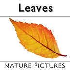 5b. Stock photos, Pictures & Images of Autumn Leaves