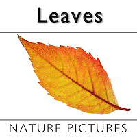 Collection - Leaves