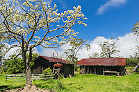 Old buildings with red roofs stand within a circle of trees against a cloudy blue sky in Kamuela, Big Island.