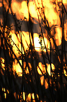 The sun is reflected off a lake behind several reeds and photographed with a technique that makes it appear to be a brush fire on a prairie