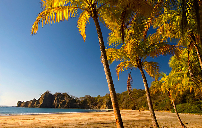 Golden Colored Palm Trees Line The Beach Of Playa Carrillo On Costa Rica's Nicoya Peninsula On The Pacific Ocean.