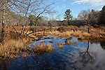 A wetland pond at Otter River State Forest in Templeton, MA