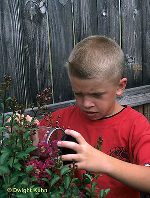 FA36-002z  Child collecting insects