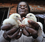 A woman in Ekwendeni, Malawi, shows off two chicks that are part of a community project to raise support for orphans and other vulnerable children, many of whom are infected by or affected by HIV.