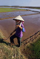 December 6th 1993-PHI LA, NORTHERN VIETNAM-A woman prepares rice paddies for planting in Northern Vietnam&Otilde;s Phi La.  Photo by Daniel J. Groshong/Tayo Photo Group