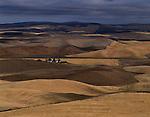 Wheat Fields Eastern Washington