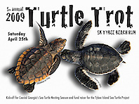 Tybee Island Sea Turtle Project, advertising poster use, 2009, Image ID: Green-Sea-Turtle-0072