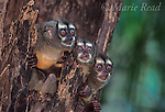 Central/South American Wildlife