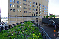 "Highline, New York City, New York, designed by landscape architects James Corner Field Operations, with architects Diller Scofidio + Renfro"" Spring"