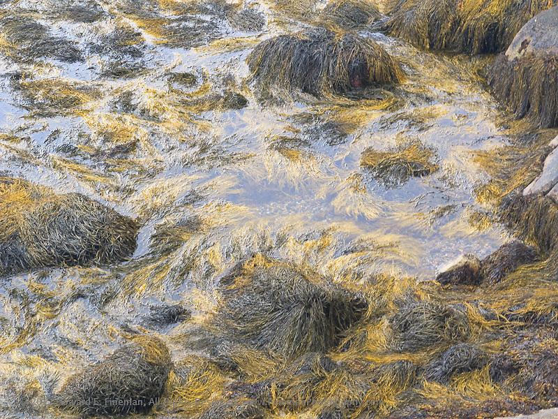 Seaweed II, Rockport, 2012