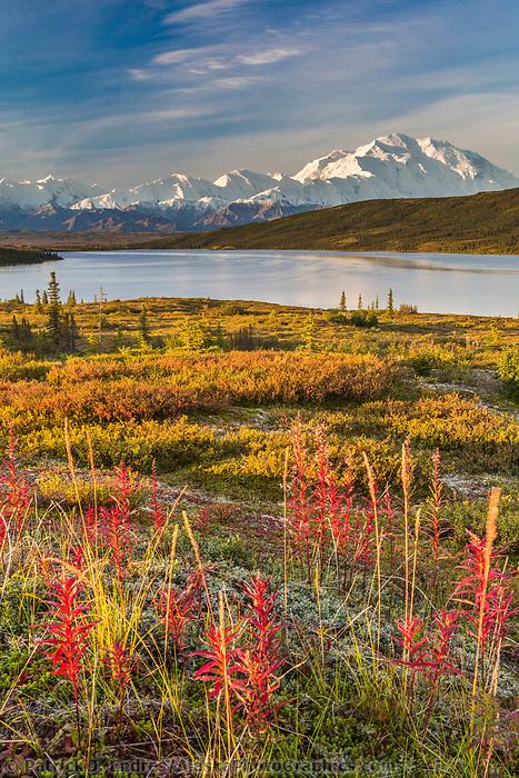 Landscape of fireweed and the autumn tundra by Denali and Wonder Lake, Denali National Park, Alaska.