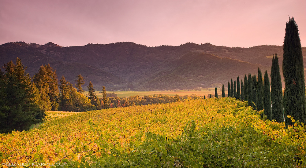 Wine Country Sunrise