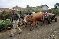 Kosovo. Village of Gaglavica. An old serb man, a farmer, guides his two cows pulling a cart on which his grandson is seated. Dirt road. Farmhouse and buildings. Kosovo ((Albanian: Kosova) is a province of Serbia. While Serbia's sovereignty is recognised by the international community, in practice Serbian governance in the Kosovo province is virtually non-existent.  &copy; 1995 Didier Ruef