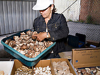 Donko shiitake mushrooms from FunGuy Farms at Toronto's Brickworks Farmers' Market on opening day,  May 26, 2007