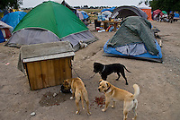 Camp Hope, eine Zeltstadt fuer Obdachlose in Ontario, Kalifornien.Das Camp hat unzaehlige Hunde..Fotos © Stefan Falke..Camp Hope, a  tent city for the homeless in Ontario, California.many dogs live at the camp