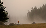 A man stands on a rock next to the Madison River in Yellowstone as the fog rises.