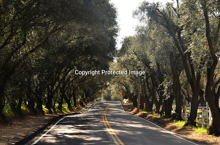 Stock Photo of tree lined street