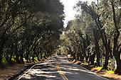 Stock Photo of tree lined street