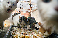 Cats gather for feeding at Ha Wenjin's no-kill cat and dog rescue farm outside Nanjing, Jiangsu, China.