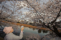 Taking video of the cherry blossom, Ueno Park, Tokyo, Japan, April 3, 2010.