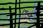 Boulouparis, station d'élevage de Ouinané