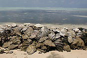 Clam shells, built into a defensive sea wall to hold back erosion of land by the ocean, on Han Island, Carteret Atoll, Papua New Guinea, on Sunday, Dec. 10, 2006.