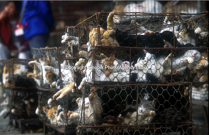 Cat Meat Market