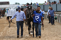HOT SPRINGS, AR - April 14: Ever So Clever #12 walks to the paddock before the Fantasy Stakes at Oaklawn Park on April 14, 2017 in Hot Springs, AR. (Photo by Ciara Bowen/Eclipse Sportswire/Getty Images)