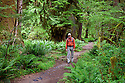 WA06836-00...Hiker on the Hoh River Trail in Olympic National Park. (MR# H2)
