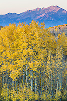 Guardsman Pass in Utah's Wasatch Mountains with bright yellow aspen leaves.