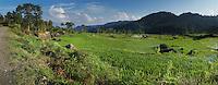 paddy fields in Toraja land, Sulawesi, Indonesia