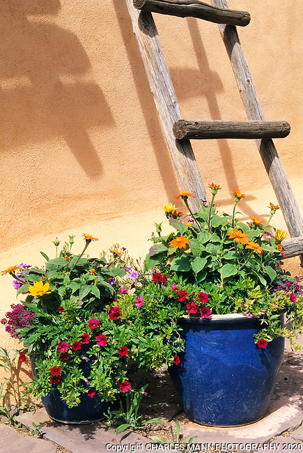 Susan Blevins of Taos, New Mexico, created an elaborate home garden featuring containers, perennial beds, a Japanese themed path and a regional style that reflectes the Spanish and pueblo architecture of the area. An lod ladder adds to the mystery and romance of a container at the bast of a stuccoed adobe wall.