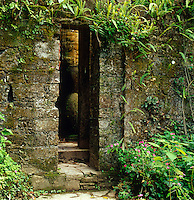 A narrow stone doorway is overgrown with ferns and tropical vegetation