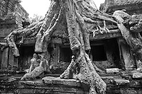 Tree roots enshroud a struture at Ta Prohm temple in angkor, Cambodia