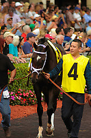 HALLANDALE BEACH, FL - APRIL 01: Always Dreaming in the walking paddock with groom for the 66th running of the $1 million Xpressbet Florida Derby at Gulfstream Park on April 01, 2017 in Hallandale Beach, Florida. (Photo by Carson Dennis/Eclipse Sportswire/Getty Images)